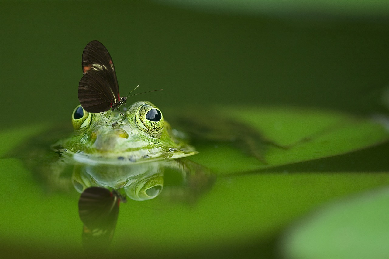 frog-540812_1280
