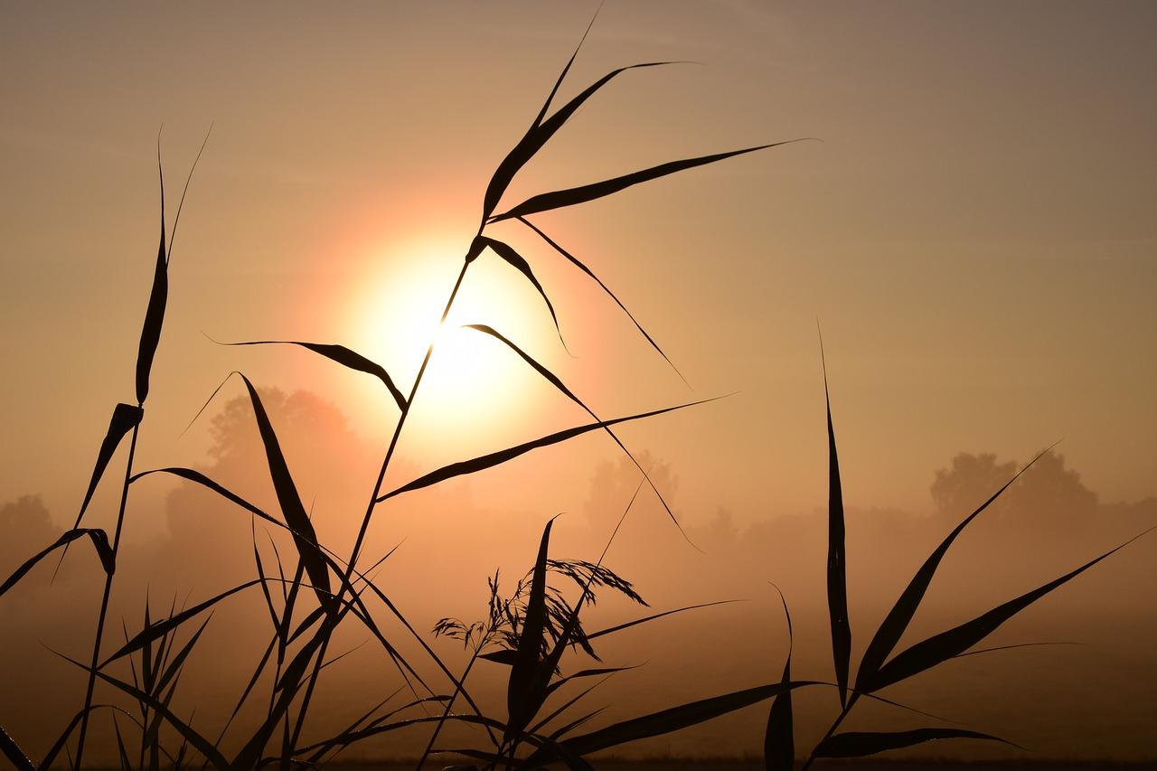 sunrise-1688094_1280