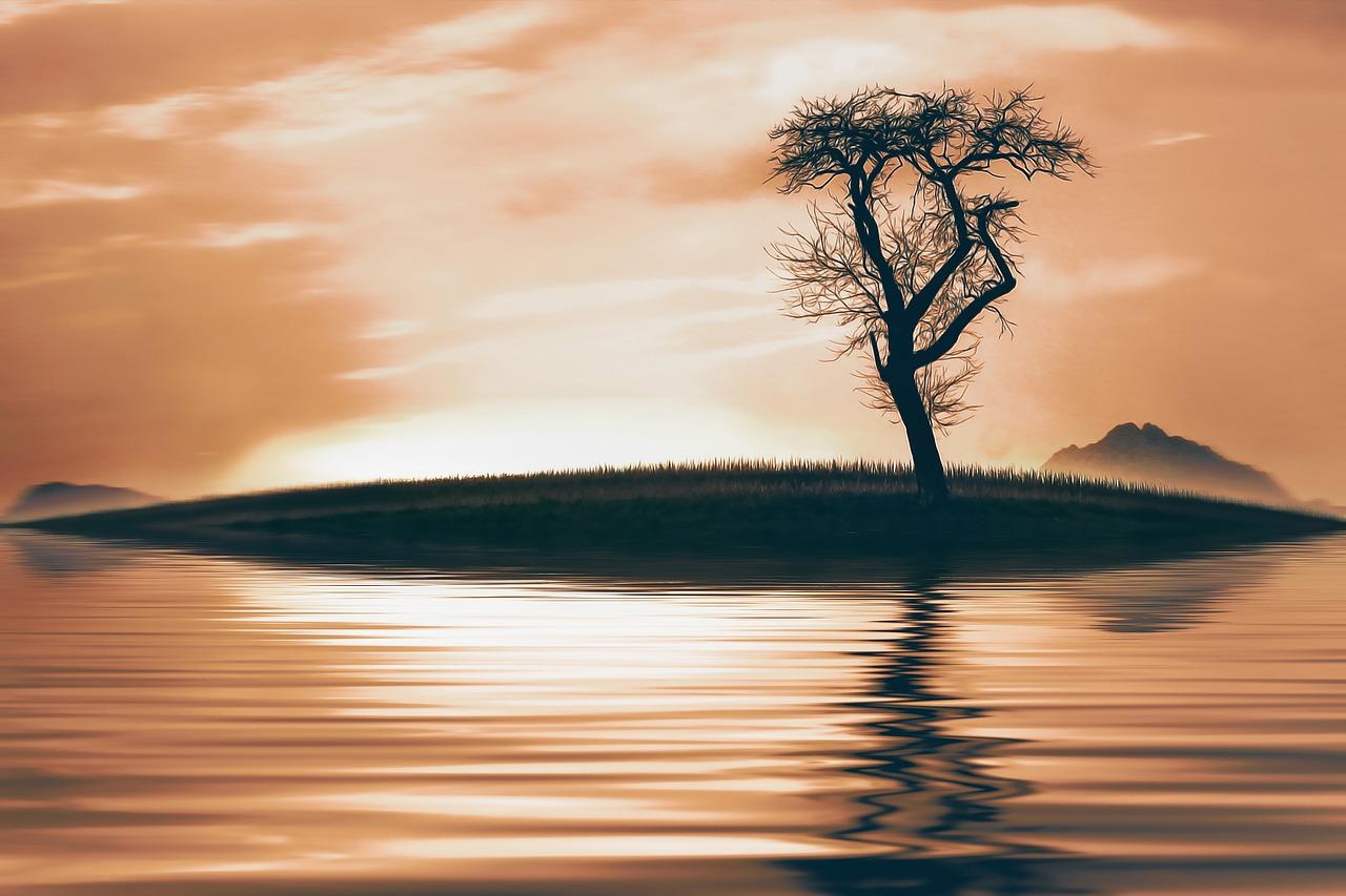 tree-716127_1280